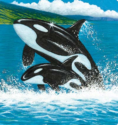 Orques rois des mers - Dessin d orque ...